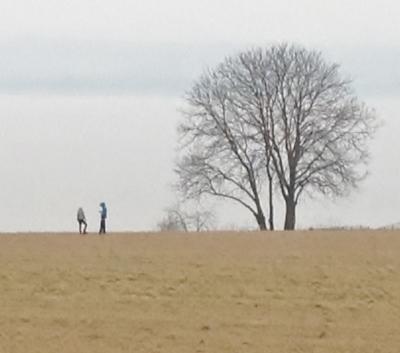 boom meer van geneve