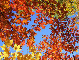 herfsbladeren aan de boom vanaf de grond gezien