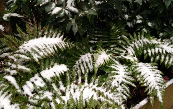 sneeuwvaren-2